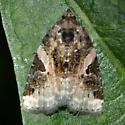 Small Moth - Pseudeustrotia carneola