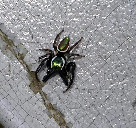 Messua Limbata green jumper  - Messua limbata
