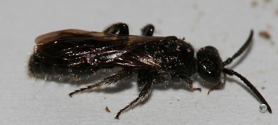 Tiphia vernalis