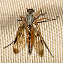 Snipe Fly - Rhagio scolopaceus - male