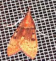 Uresiphita reversalis