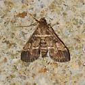 European Pepper moth for October - Duponchelia fovealis - female