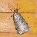 Unidentified Moth-A-20191018 - Alsophila pometaria - male