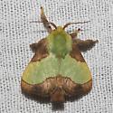 Stinging Rose Caterpillar Moth - Hodges#4699 - Parasa indetermina