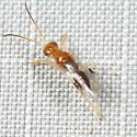 Wasp - Anteon