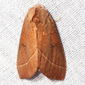 White-dotted Prominent Moth - Hodges #7915 - Nadata gibbosa