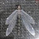 Owlfly Dining - Myrmeleon