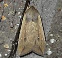 Armyworm moth? - Mythimna unipuncta