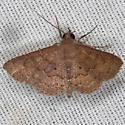 Moth - Hodges #8579 - Antiblemma concinnula