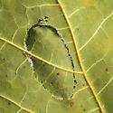 Tortricid in Maple Leaves - Catastega aceriella