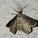 Macaria sexmaculata