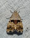 From Oak Juniper Cobubatha lixiva 9014?