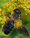 Sculptured Resin Bee - Megachile sculpturalis