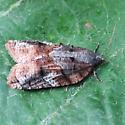 Platynota idaeusalis