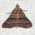 Bent-winged Owlet Moth - Hodges #8370 - Bleptina caradrinalis - male