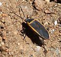 Bug near Volcan Mountain