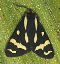 Wood Tiger Moth - Arctia plantaginis - male
