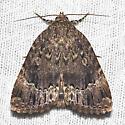 Copper Underwing - Hodges#9638 - Amphipyra pyramidoides