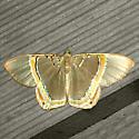 Phrygionis privignaria - Hodges #6671.2 - Phrygionis privignaria - male