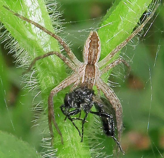 Spider in web with prey - photo#15