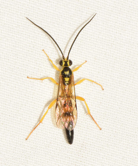 wasp072118a