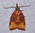 Platynota flavedana - Black-shaded Platynota Moth - Platynota flavedana