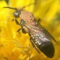 Mites Parasitizing Bee