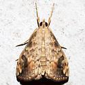 Evergestis rimosalis