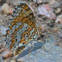 Butterfly ws 38mm