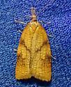 Genus Sparganothis - Sparganothis xanthoides - female