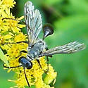 Grass-carrying Wasp - which species? - Isodontia