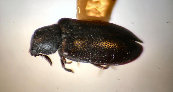 Neat Antennae - Semijulistus