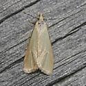 micro moth - Phtheochroa fulviplicana