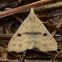 litter moth - Renia salusalis - male