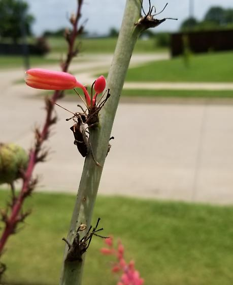 Flying bugs on my yucca