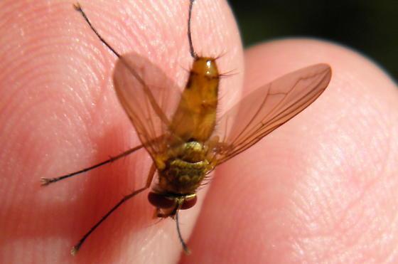Fly - Leskia