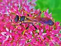 Id help needed - wasp - Sceliphron caementarium
