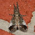 Yellow-based Tussock Moth - Dasychira basiflava