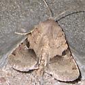 slant-band moth - Ulolonche disticha