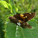skipper - Epargyreus clarus
