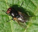 fly on deer carcass