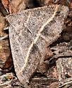Which moth - Digrammia irrorata