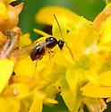 micro-wasp?