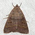 Common Oak Moth - Hodges #8591 - Phoberia atomaris