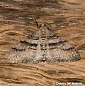 Moth - Prionomelia spododea