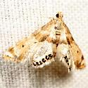 Petrophila? - Petrophila fulicalis