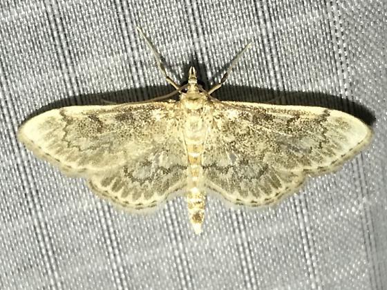 Anania quebecensis
