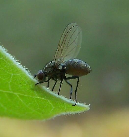 Fungus-ridden fly