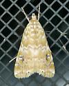 Texas SE Gulf Coast - Hellula phidilealis