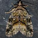 NMW2018 Moth #128 - Protodeltote muscosula
